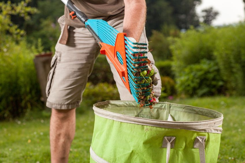 21550827 – a gardener is going to throw away the old leaves